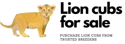 Lion cubs for sale